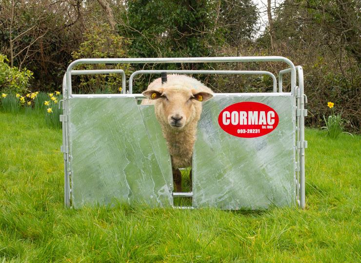 products-Lambing-Adoption